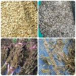 토종 유기농 참깨 판매
