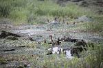 양산 황산공원의 큰가시연