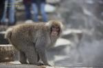 나가노 원숭이 온천 가는길 [1]