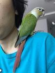 앵무새 친구