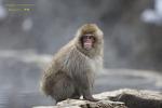 나가노 원숭이 온천 가는길 [2]