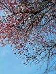 봄이 온거였어