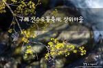 구례 산수유꽃축제, 계곡이 온통 봄의 노란빛으로 물든 상위마을
