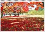 경주관광 대릉원(大陵園)의 가을