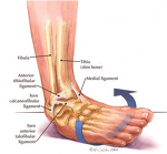 The Effects of Manual Therapy and PRIMFIT Unstable Surface Balance Training on Walking Gait Cycle Post an Acute Grade 3 Inversion Ankle Sprain