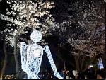과천렛츠런파크 야간벚꽃축제 요긴가야됑!!