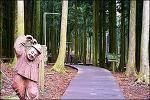 (제주 여행)삼나무숲이 일품인 제주 절물자연휴양림 그리고 절물 오름