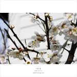 지금은 봄 ^^