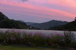 [이 한 장의 사진] 노을과 코스모스, 붉은 기운이 가득한 아름다운 죽풍원/죽풍원의 행복찾기프로젝트