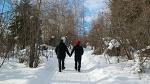 3월 [알래스카 오로라 여행] 자작나무 숲길 트레킹 투어 - Birch Forest Trail Trekking in Fairbanks, Alaska [패키지 맞춤 자유 선택 허니문 신행 신혼여행 전문 현지 관광 가이드]