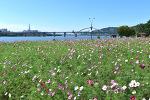 제17회 구리 한강시민공원 코스모스축제 꽃밭 미리 다녀왔습니다