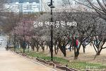 김해 연지공원, 봄이면 매화들이 곱게 꽃을 피우는 곳