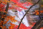 설악산 쌍용폭포 10월 단풍. (10월 9일)