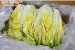 해남다정농원 해남절임배추로 맛있는 김장에 도전하세요 (2월달까지 주문예약)