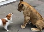 사자보다 두려운 세상에서 가장 싸움 잘하는 개 TOP7