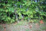 경의선 숲길의 턱시도 코숏 길냥이 | 캐논 35mm 1.4 사무엘