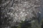 선동 산책길에서 만난 봄꽃들