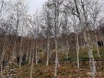 [한국/경기] 광주 화담숲 ① : 숲 산책코스