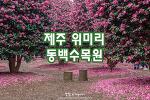 제주 위미리 동백수목원, 동백꽃 향기 가득한 제주의 겨울