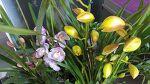 자두집 대문앞에 놓여진 예쁜꽃  (화: 맑음)