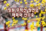 창원 무학산 청연암에서 만난 반가운 봄, 매화와 산수유