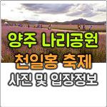 양주 나리공원 천일홍 축제 모습과 입장료 및 주차장 정보