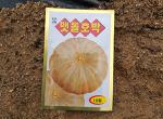 맷돌호박(늙은호박) 재배[씨앗 파종,발아,정식,수확시기와 밑거름,웃거름,심는방법]