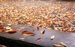 가을 속으로
