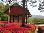 <진천>봄꽃여행(2)- 봄꽃 명소 - 보탑사