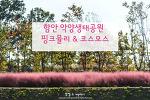 함안 악양생태공원 핑크뮬리, 가을이라 너무 행복하다.