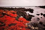 함초가있는 제주바다풍경