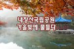 정읍 내장산 단풍여행, 화려하게 물든 가을 숲길을 걷는다