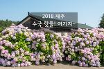 제주 수국길, 수국과 함께 인생샷 남겨보는 2018 핫플!