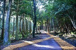 ( 제주여행) 서귀포 치유의 숲-몸과 마음이 와닿는 숲