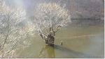 아름다운 겨울 주산지(注山池).