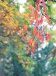 만날재에서 만난 가을