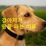 강아지가 땅을 파는 이유?