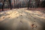 숲속의 산책, 융건릉 | 화성 가볼만한곳, 조선왕릉