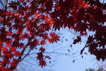 문복산 자락으로 다녀온 가을 야유회
