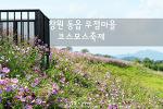 창원 무점마을 코스모스 축제, 가을바람 살랑이는 코스모스 꽃길