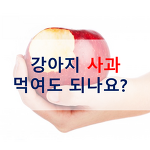 강아지에게 사과 먹여도 되나요? 효능 및 급여방법