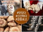 표고버섯선물세트~ 마음을 전해보세요 ~ 장흥표고버섯으로 최상품만으로 정성을 다해 담았습니다