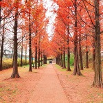 상암동 하늘공원은 산책하기 좋은 여행코스