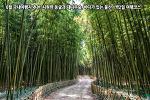 6월 국내여행지 추천, 시원한 동굴과 대나무숲, 바다가 있는 울산 1박2일 여행코스