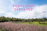 부산 을숙도 생태공원, 핑크뮬리와 메밀꽃을 한 곳에서!