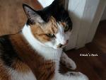 천연기념물 : 거짓말하는 고양이