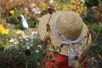 [전원생활] 돌과의 전쟁 # 시골밥상 # 은행 재취 # 땡감 선물 # 국화 꽃놀이 2018