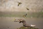 홍법사 방울새