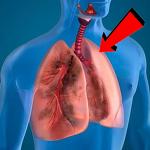 폐에 좋은 음식 4가지 무엇이 있을까?