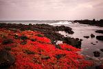함초가 있는 제주바다